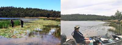 Before and after shots of the area treated by manually slashing at Four Springs Lake. Anglers Alliance Tasmania executive member John Broomby admiring the work.