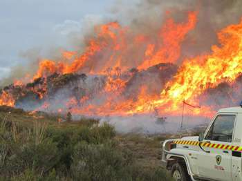 An image of fire, a tanker and fire fighters attending a large blaze near Miena in Tasmania's central highlands.