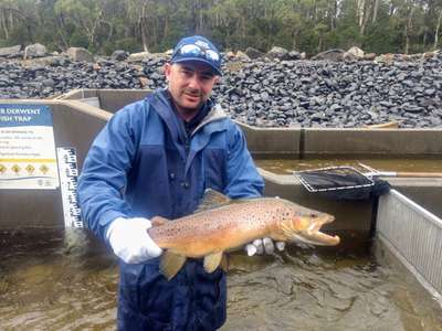 IFS staff member, Paul Middleton, and a brown trout making its way up the River Derwent on its annual spawning migration