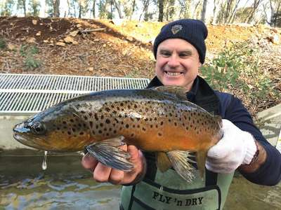 Hatchery and Stocking Manager Brett Mawbey with another quality brown trout at Arthurs Lake