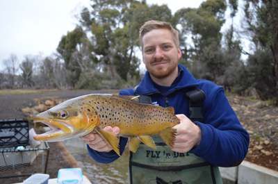 A photo of Inland Fisheries Service staff member holding a trout with a while tag located in it's adipose fin.