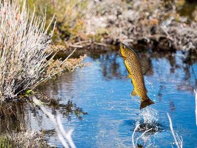 Tasmanian Trout Fishing Photo Competition winners!