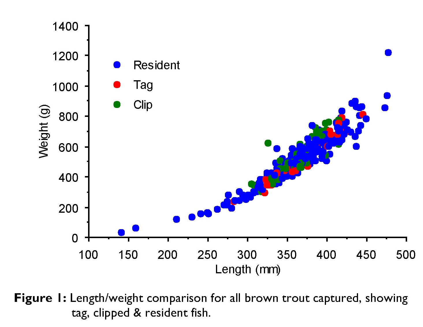 Length/weight comparison for all brown trout captured, showing tag, clipped & resident fish.